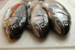 Ledsen fisk Arkivbild