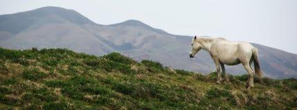 Ledsen häst Arkivbild