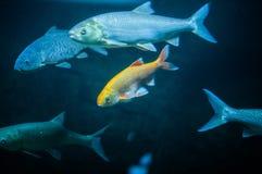 Ledsen havsfisk arkivfoto