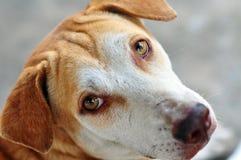 Ledsen hund Royaltyfria Bilder