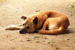 Ledsen hund arkivfoton