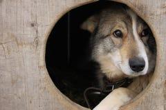 Ledsen hund Arkivfoto