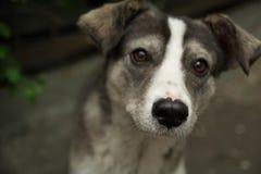 Ledsen hund för gata royaltyfri foto
