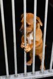 Ledsen hund i en bur royaltyfria foton
