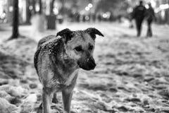 Ledsen hund i vinter Royaltyfria Foton
