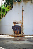 Ledsen hund i vinter Royaltyfri Fotografi
