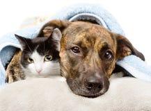 Ledsen hund och katt som ligger på en kudde under en filt isolerat arkivbilder
