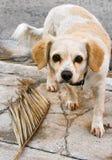 Ledsen hund som ser honom kamera Royaltyfria Bilder
