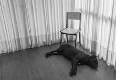 Ledsen hund som väntar med stol royaltyfri bild