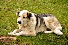 Ledsen hundbyracka royaltyfri foto