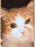 Ledsen katt fotografering för bildbyråer