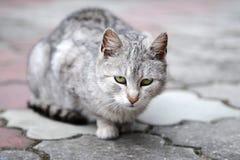 Ledsen katt Royaltyfri Foto