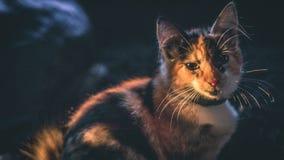 Ledsen katt i morgonen arkivfoto