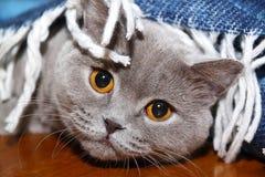 Ledsen katt under sängöverkastet Arkivbilder