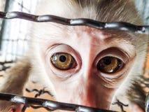 Ledsen liten apa i en bur Fotografering för Bildbyråer