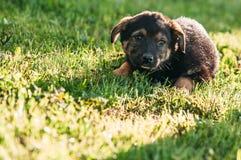 Ledsen pooch på gräset royaltyfri foto