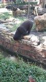Ledsen så mager björn arkivbilder
