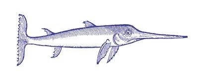 Ledsen seende svärdfisk i profilsikt Illustration efter en historisk eller tappningträsnitt från det 16th århundradet Royaltyfri Fotografi