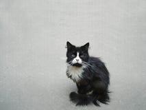 Ledsen svart katt Royaltyfri Foto
