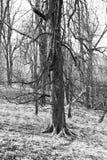 Ledsen tree Royaltyfri Fotografi