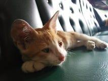 Ledsen ung katt Royaltyfri Bild
