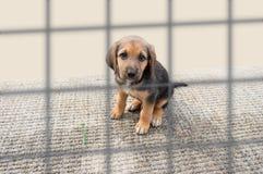 Ledsen valp i en hundkoja arkivfoton