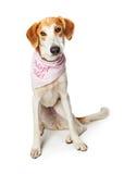 Ledset bära för hund adopterar mig bandanaen arkivfoton