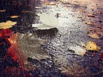 Ledset foto för höst med sidor och regndroppar royaltyfria bilder
