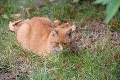 ledset rött hemlöst ligga för katt royaltyfria bilder