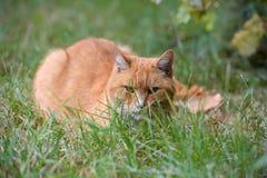 ledset rött hemlöst ligga för katt arkivbild