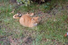ledset rött hemlöst ligga för katt royaltyfri bild