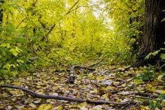 Ledset skoglandskap för höst Arkivfoto