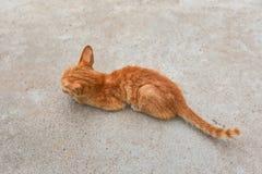 Ledsna Kitten Animal Arkivbild