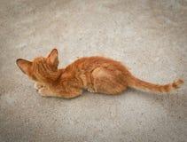 Ledsna Kitten Animal Royaltyfri Fotografi