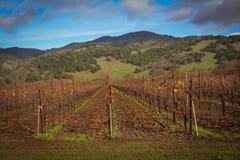 Ledson Vineyard & Winery near Kenwood CA Stock Photo