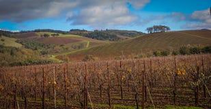 Ledsonwijngaard & Wijnmakerij dichtbij Kenwood CA Stock Foto's