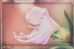 Ledum, imitation du fond de peinture d'aquarelle, filtre en pastel coloré Photos libres de droits