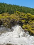 Ledy Knox geyser. Lady Knox geyser is activated by a soap powder. Rotorua area, New Zealand Stock Image