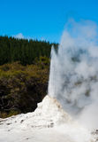 Ledy Knox geyser. Lady Knox geyser is activated by a soap powder. Rotorua area, New Zealand Royalty Free Stock Photography