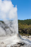 Ledy Knox geyser. Lady Knox geyser is activated by a soap powder. Rotorua area, New Zealand Stock Photos