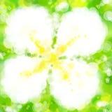 Lee-La-VA-dee Blumenunschärfe bokeh Kunsttapete Stockbilder