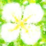 Lee-La-va-dee Papier peint d'art de bokeh de tache floue de fleur Images stock
