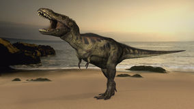 T-Rex Tyrannosaurus Rex dinosaur Royalty Free Stock Image
