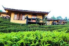 Lee Wine Lodging-de huizen onder de theeaanplanting op de heuvel hellen bij Thais Thais het houden van van Verbodsrak dorp, Mae H royalty-vrije stock fotografie