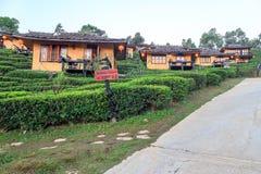 Lee Wine Lodging-de huizen onder de theeaanplanting op de heuvel hellen bij Thais Th van Verbodsrak royalty-vrije stock afbeeldingen
