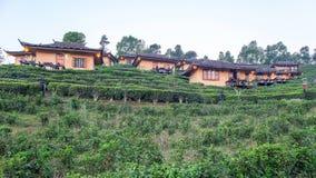 Lee Wine Lodging-de huizen onder de theeaanplanting op de heuvel hellen bij Verbod Rak Thais T stock foto's