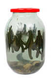 Leech in a glass jar Stock Image