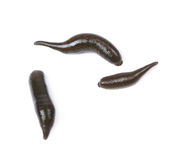 Leeches Stock Photography