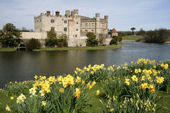 Leeds castle gardens spring daffodils kent uk Royalty Free Stock Images
