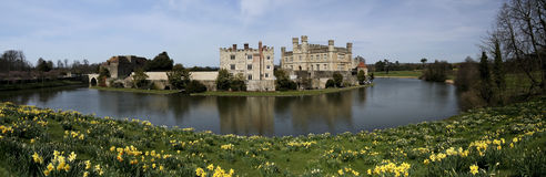 Leeds castle spring daffodils kent england Royalty Free Stock Image